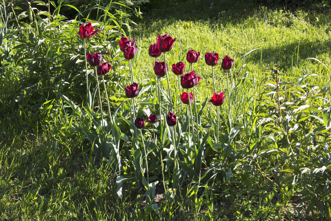 Фото майского цветка